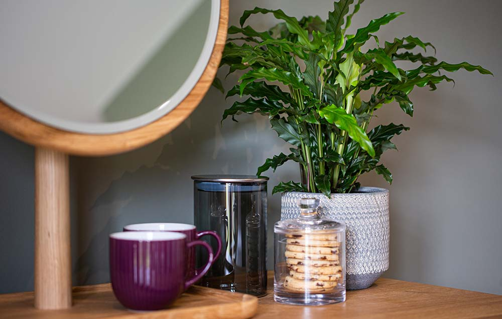 Mirror with cups and plant